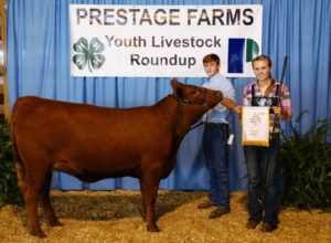 Cover photo for Prestage Farms Youth Livestock Round-Up, Sampson County Heifer and Lamb Show